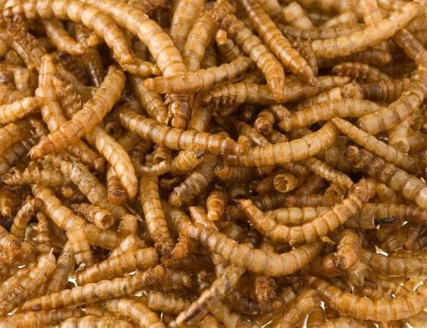 Mehlwürmer getrocknet 1 kg