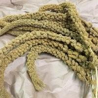Kolbenhirse französisch gelb 20 kg